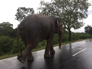 There is an elephant on the road!